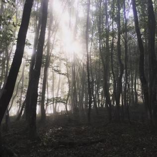 trail entrange foret