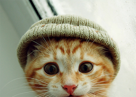 chat-bonnet